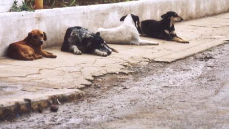Comissão é criada para proteção de cães e gatos em Sacramento