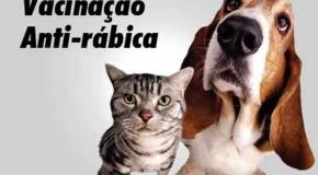 Zoonoses de Araxá realiza revacinação contra a raiva na próxima semana