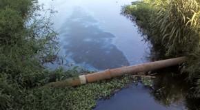 Polícia de Meio Ambiente registra derramamento de óleo no Lago Norte, no Barreiro