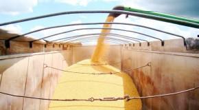 Valor da produção pecuária mineira em 2013 deve atingir R$ 14,6 bi
