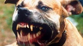 Cadela ataca casal e proprietário é preso pela Polícia Militar