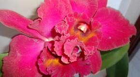 Araxá recebe tradicional Exposição de Orquídeas na Semana da Mulher