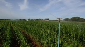 PIB do agronegócio de Minas Gerais bate recorde em 2013