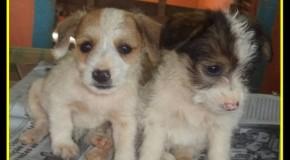 Mãos de Assis já salvou mais de dois mil cães das ruas de Araxá, e continua precisando de ajuda