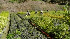 IEF e empresas assinam termos de cooperação visando preservação ambiental