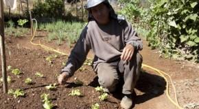 Hortinha do Cemei, em Tapira, proporciona alimentação de qualidade para a meninada