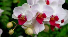 Araxá recebe Feira de Orquídeas a partir dessa quinta feira