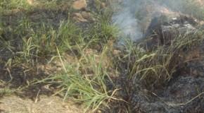Acusado preso por atear fogo em vegetação na MG-428
