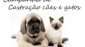 Centro de Zoonoses de Patos realiza inscrições para castração de animais