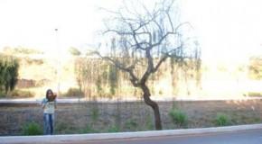 Prefeitura de Patos realiza corte de árvores mortas da avenida Fátima Porto