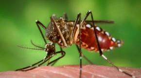 Pratinha realiza Dia D de Combate ao Aedes Aegypti na próxima sexta feira
