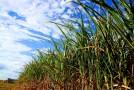Produção sucroenergética ganha força no Triângulo e cresce, em média, 13% ao ano