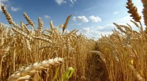 Minas Gerais deve produzir 12,6 milhões de toneladas de grãos na safra 2014/15