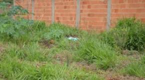 Utilidade Pública: o que a lei exige dos proprietários de lotes vagos em Patos de Minas?