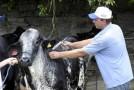 Produtores rurais de Sacramento aderem à campanha de vacinação contra brucelose