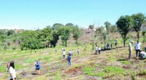 Parque do Mocambo, em Patos, ganha mais 500 mudas de árvores nativas