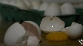 Ao contrário do que se pensa, consumo de ovos de galinha na Quaresma tem queda em 2015