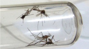 Uberlândia, no Triângulo Mineiro, é a cidade com mais casos de dengue em MG