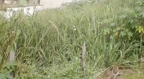 Fiscalização em terrenos em Araxá tem feito parte da rotina do Corpo de Bombeiros