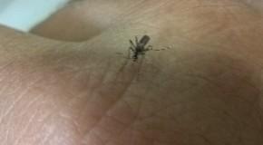 Secretaria de Saúde vai capacitar militares do Exército para o controle do Aedes aegypti