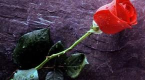 Rotary Club Araxá realiza mais uma Campanha das Rosas, na Semana da Mulher