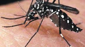 Em uma semana, aumentam os registros de suspeita de Zika Vírus em Araxá