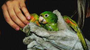 Governo de Minas Gerais amplia áreas de soltura de animais da fauna silvestre