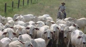 Já começou a segunda etapa da vacinação contra aftosa em Minas Gerais