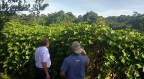 Propriedades rurais que abastecem a Ceasa, em Patos, são visitadas