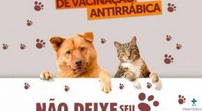 Bambuí realiza vacinação de cães e gatos na cidade e zona rural