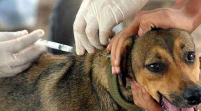 Campanha de Vacinação Antirrábica Animal na zona rural de Araxá começa dia 17