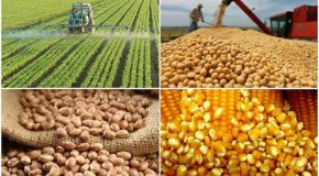 Agropecuária alavanca a economia do estado com expectativa de negócios da ordem de R$87 bilhões