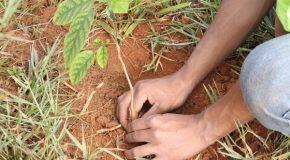 Abertas inscrições para vagas do Programa Casa do Pequeno Jardineiro
