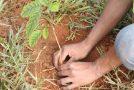 Ação Social prorroga inscrições para processo seletivo da Casa do Pequeno Jardineiro