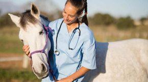 Web-rádio: Processo seletivo para contratação de veterinários e agrônomos segue aberto no IMA