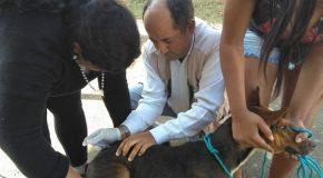 Divulgado calendário da Vacinação Antirrábica 2021 em Bambuí