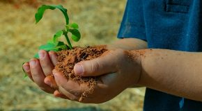 FCAA realiza projeto que incentiva plantio de árvores frutíferas