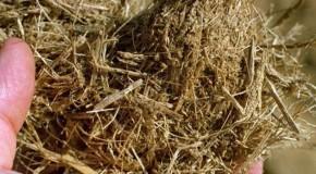 Falta de chuva provoca perdas na agricultura de Ibiá