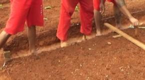 Detentos de Araxá aprendem a cultivar terra em curso de profissionalização