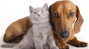 MG ganha lei que garante proteção e bem estar a cães e gatos