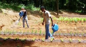 Programa Pequeno Jardineiro, em Araxá, é selecionado para prêmio estadual